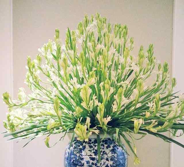 hoa huệ thờ cúng