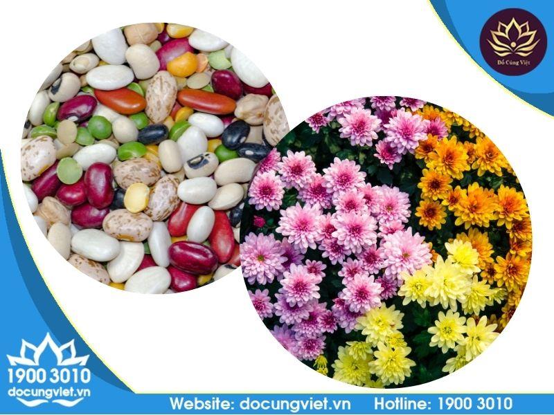 Đậu, Hoa - Lễ vật cúng hàn long mạch